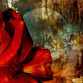 Een roos voor de liefde van Max Steinwald