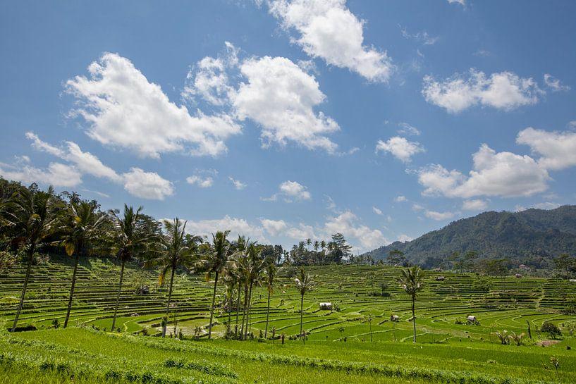 Beste schilderachtige Aziatische achtergronden en landschappen, volkscultuur en natuur van Bali van Tjeerd Kruse