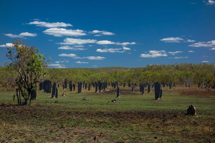 Termieten heuvels in Litchfield National Park  van Tessa Louwerens