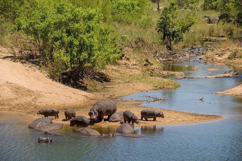 nijlpaard familie van Johan v. Schie
