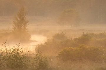 Beau matin brumeux dans une zone naturelle aux Pays-Bas sur