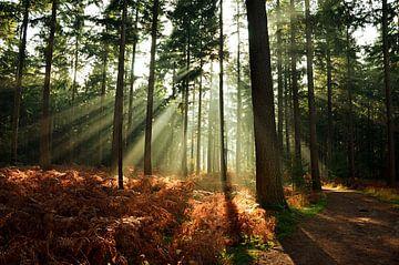 Early sunshine von Wilco Bos
