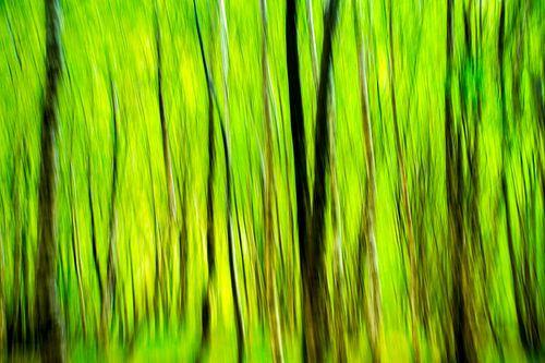 Bos in het groen - studie van