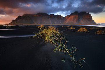 Stokksnes, IJsland von