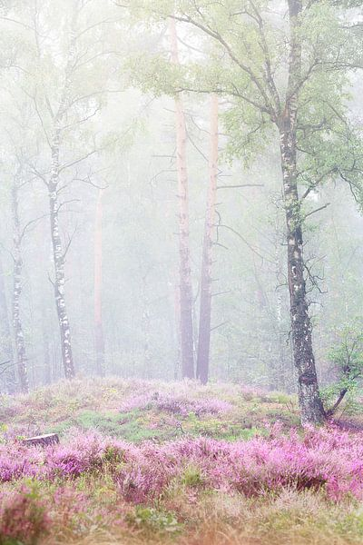 Mistig bos op de Veluwe van Monique van Genderen (in2pictures.nl fotografie)