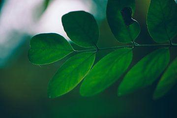 Vol groen blad in een dorre herfst