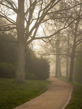 Noorderplantsoen Groningen, Wingnussbaum im Park von Hessel de Jong