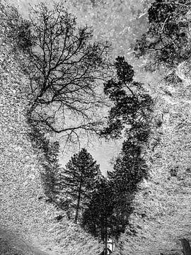 Versteckter Wald von Frank Wijsmuller