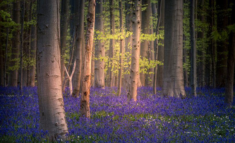Blue carpet van Wim van D