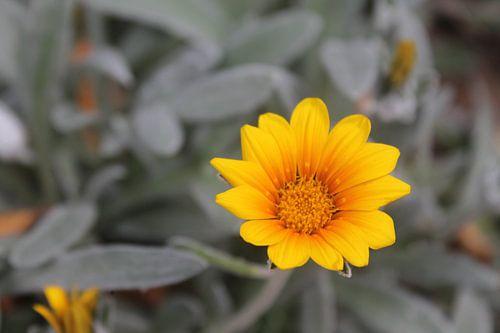 Gele bloem van Fanny Nordberg