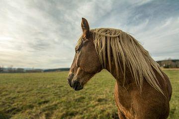 Natur Bäume Wasser Sonne Pferd von Johnny Flash