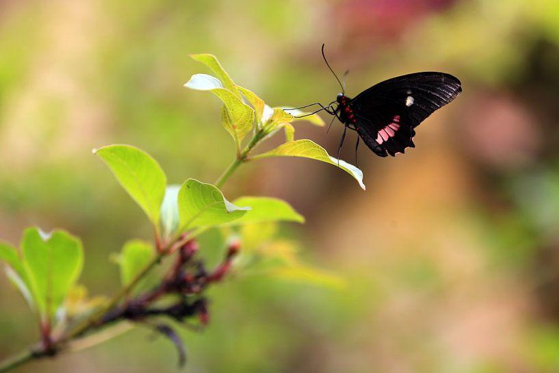 Vlinder sur Jeroen Koppes