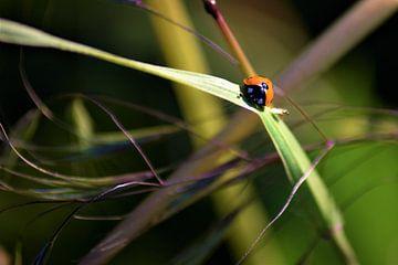 Lieveheersbeestje in abstract landschap van Maud De Vries