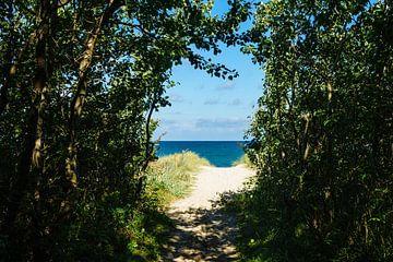 Strand an der Ostsee bei Graal Müritz von Rico Ködder