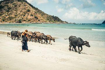 Koeien op het strand van Selong Belanak, Lombok (Indonesië) van Expeditie Aardbol