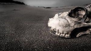 landschap schedel
