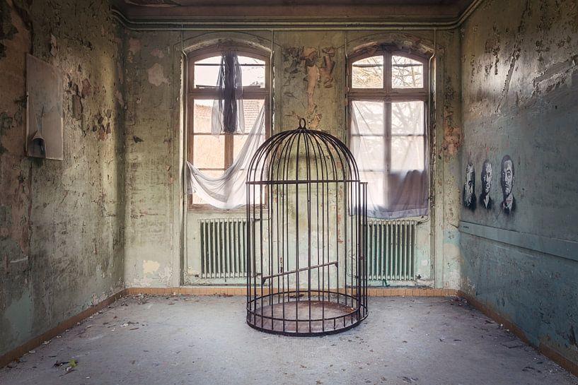 Vogel  Kooi. van Roman Robroek