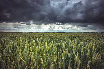 Dreigende wolkenluchten bloeiend graanveld van Fotografiecor .nl