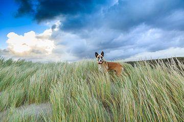 Hond in de vrije natuur von Henk van den Brink