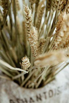 Trockenblumen Nahaufnahme von Sharon Brouwer