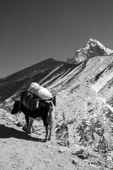 Himalaya Nepal Zwart-Wit