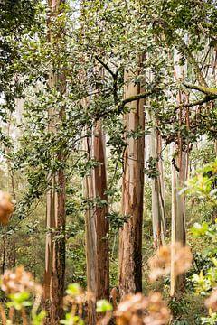 laurel trees on madeira van Compuinfoto .