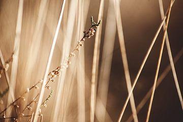Nahaufnahme von Gras von Bjorn Cornelissen