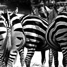 Zebra kontjes zwart wit van Nora Verhoef