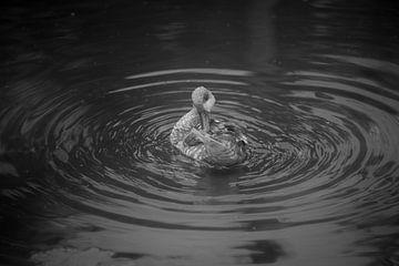 Wasch-Ente in Schwarz-Weiß von Frederieke Knol