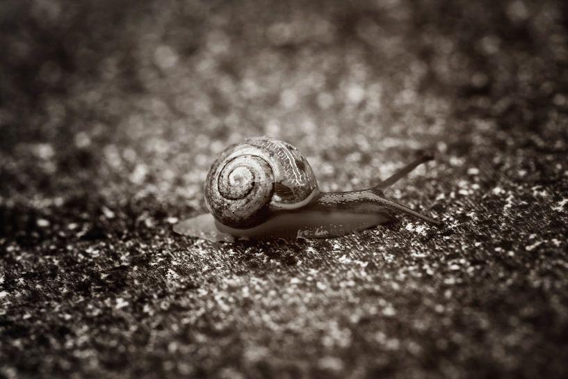 Een lange weg te gaan... van LHJB Photography