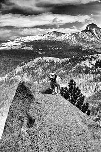 Yosemite Dappere Hond von Maja Bredschneijder