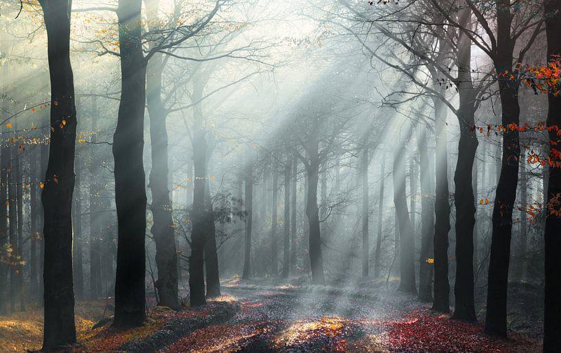 De laatste herfstblaadjes van Rob Visser