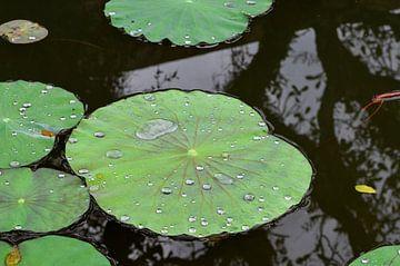 Waterlelies van Annabel van Wensveen