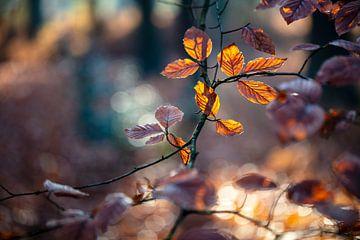 Herfstbladeren van Edwin Butter