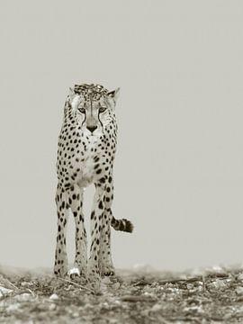 De sterke cheetah