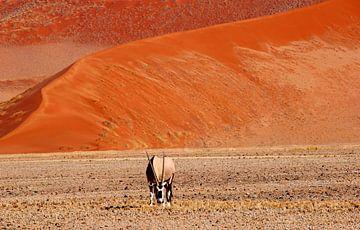 Oryx, zandduinen, Namibië van Inge Hogenbijl