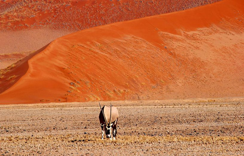 Oryx-Gemsbock Namib-Wüste von Inge Hogenbijl
