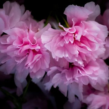 Cherry Blossom van Sense Photography