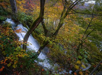 Teintes d'automne sur Joris Pannemans - Loris Photography