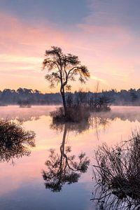 Een mystieke zonsopkomst. van Jacqueline de Groot