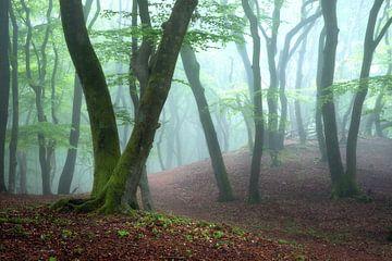 Mistig voorjaarsbos van Ramon Oost