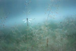 Juffertje in de mist.