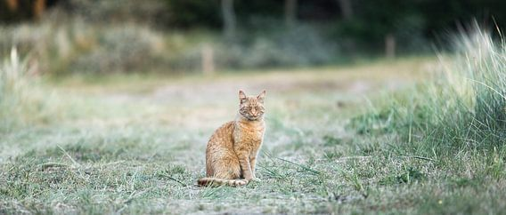 Een kat met karakter