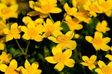 Gele bloemen van Petra De Jonge