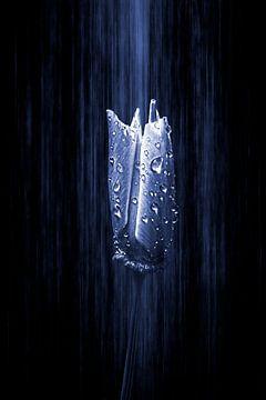 blauw stralende gouden klaproos van Ribbi The Artist