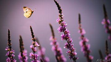 Schmetterling von Maurice Cobben