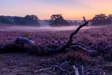 Farbenfroher Sonnenaufgang an der Brunsommerheide im leichten Morgennebel von Kim Willems