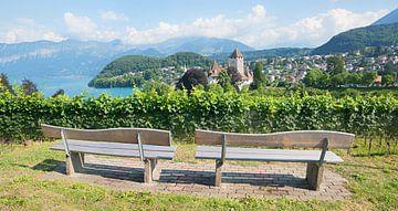 Uitzicht op de banken in de wijngaard van Spiez met uitzicht op het Thunmeer van Susanne Bauernfeind