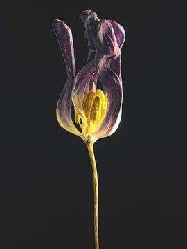 Verwelkt 1 von Andreas Berheide Photography