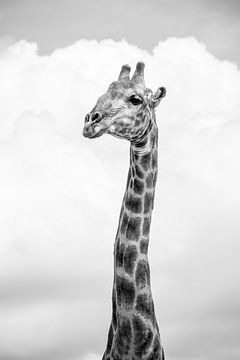 Giraffe van Katrin Engl